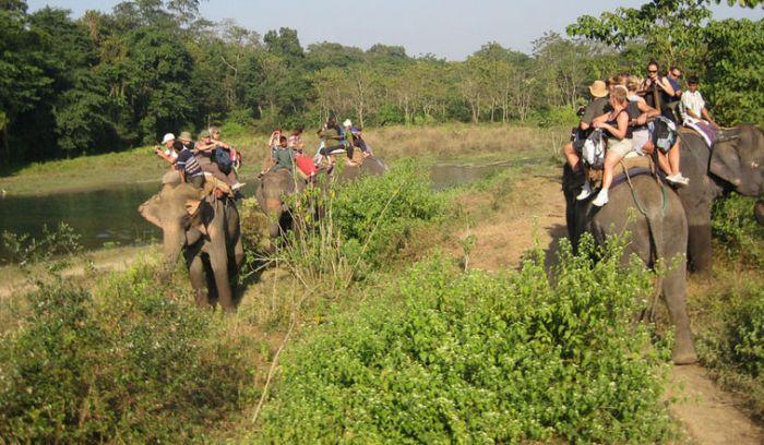 Elephant Jungle safari- best way to explore wild animals in Nepal
